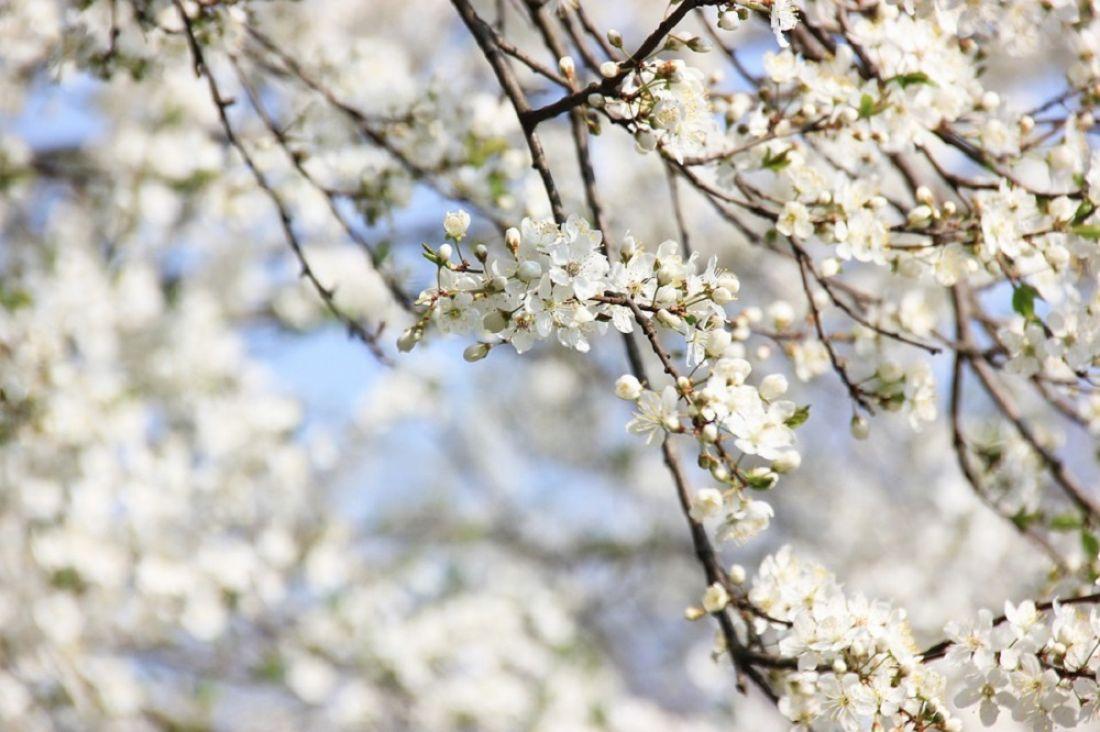 Какие работы нужно провести в саду в мае