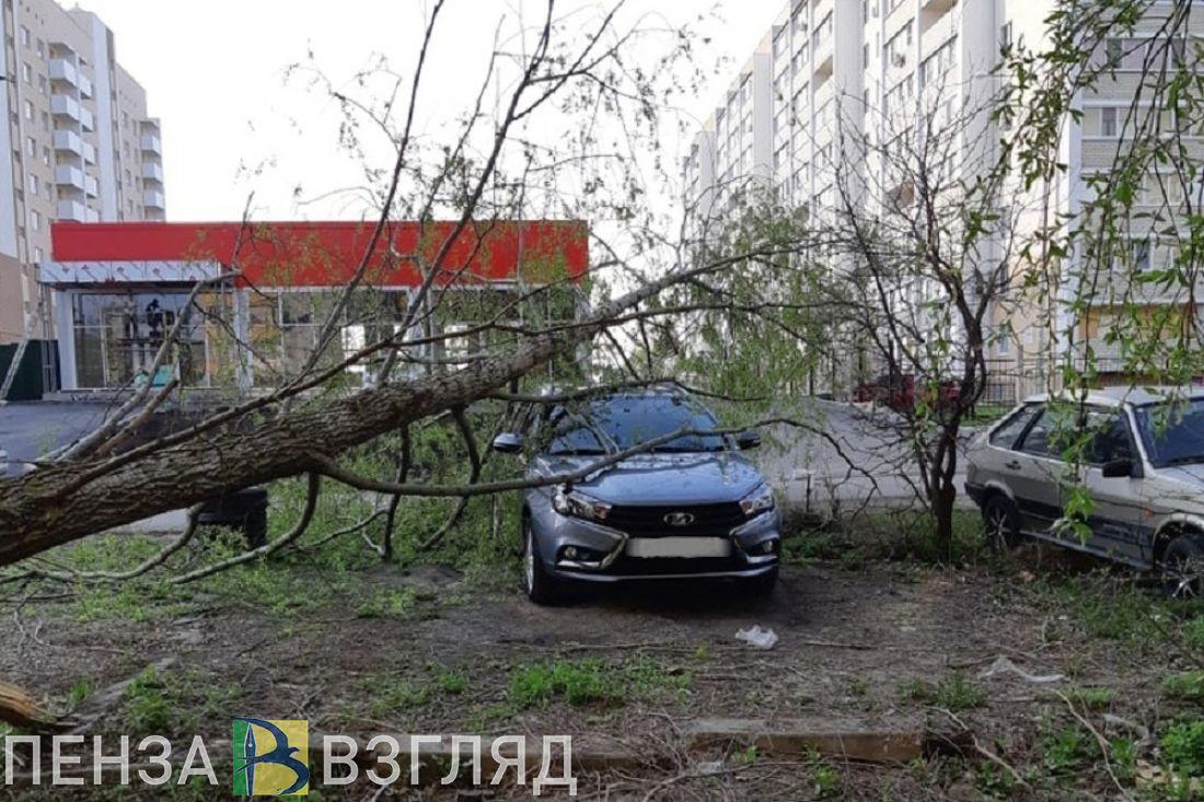 В Пензе на новый автомобиль рухнуло дерево